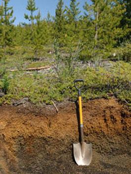 Nazko Cone Soil Profile